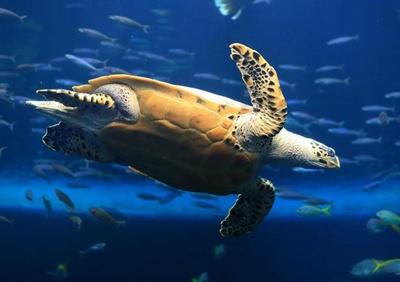 敬老の日はお得に水族館を楽しむことができる