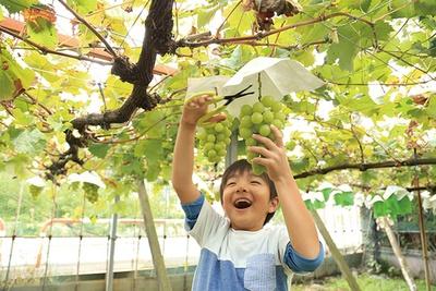 シャインマスカットを収穫しながら思わず笑顔に / 秩父フルーツファーム (埼玉・西武秩父)