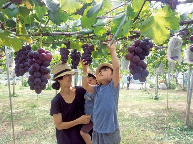 新鮮なブドウを使った手作りのドリンクやスイーツも自慢 / 盤峰園 (栃木・大平)