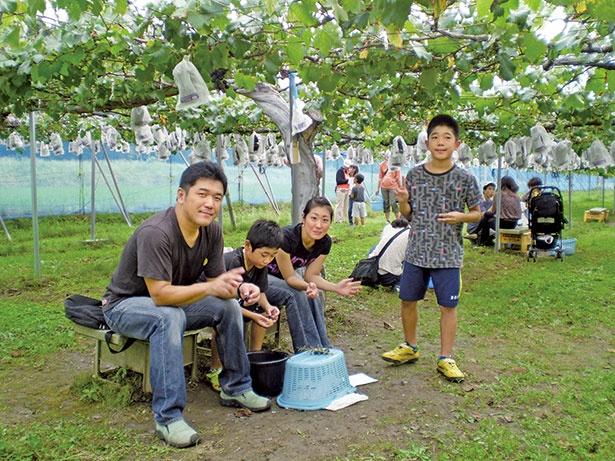 ブドウと一緒にナシや柿狩りも楽しめる / フルーツパーク久松農園 (茨城・土浦)