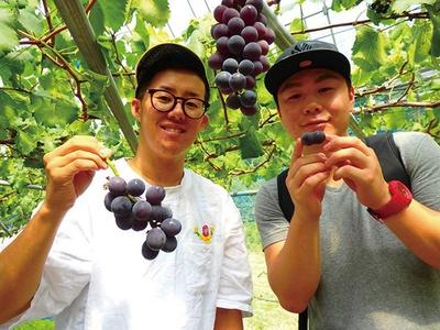 駅から1分でブドウ狩りを満喫 / 和銅ぶどう園 (埼玉・和銅黒谷)