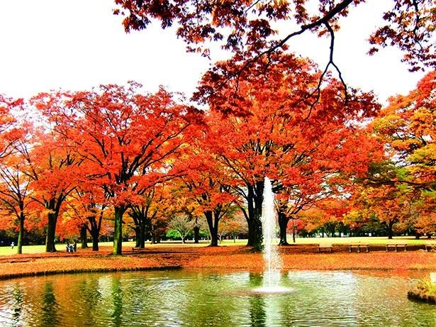 代々木公園(東京都渋谷区)
