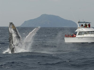いかにクジラの行動を読み、姿を現す場所に先回りできるかがガイドの腕の見せどころ