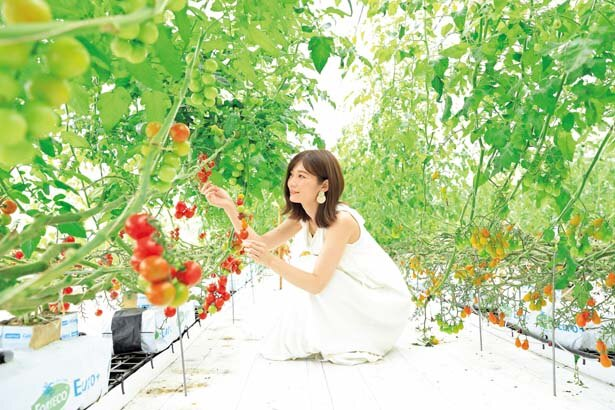 温室には13種ものトマトが/グリナリウム淡路島