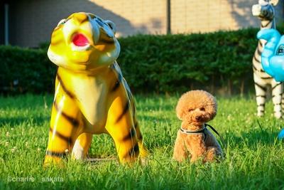 【写真を見る】トラの遊具になりすましてる...!?かわいすぎるチャーリー君