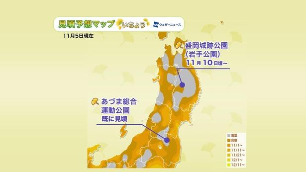 2020年 東北地方の紅葉(イチョウ)見頃予想マップ(11月5日現在)