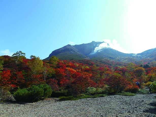 茶臼岳山麓 姥ヶ平からの紅葉と茶臼岳