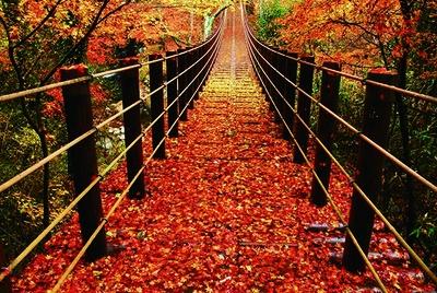 つり橋から望む紅葉は圧巻の美景