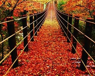 茨城のおすすめ紅葉スポット3選!川のせせらぎに耳を傾けながら紅葉狩り