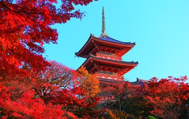世界遺産に選ばれる名所が1000本の紅葉であでやかに!