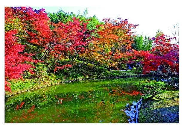 【写真】桃山文化の香りを感じる名所で、秋色に染まる庭園美を堪能
