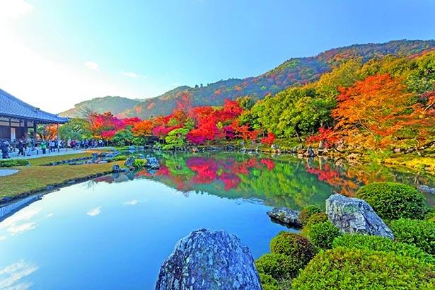 嵐山を借景とした名庭園が真っ赤なカエデで彩られる