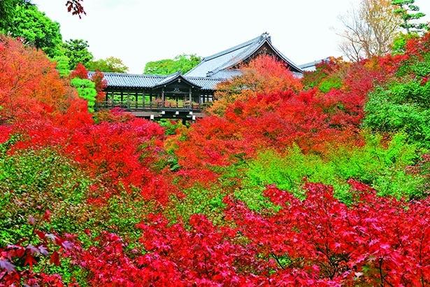 真紅の海に浮かぶ通天橋で日本屈指の渓谷美を堪能する