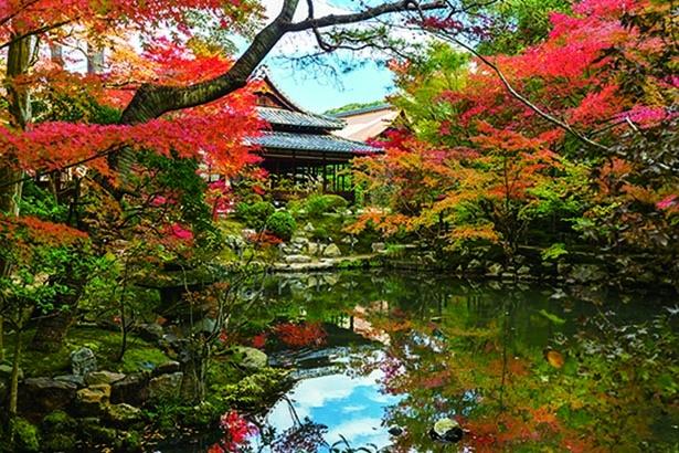 巨大な三門の楼上から京の紅葉を一望!