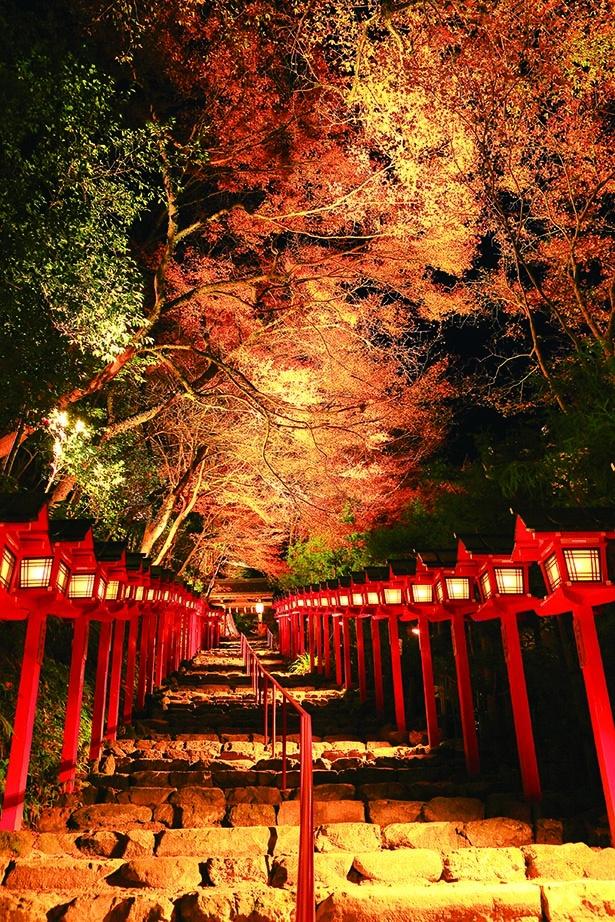 灯篭が錦秋の京の奥座敷へと誘う