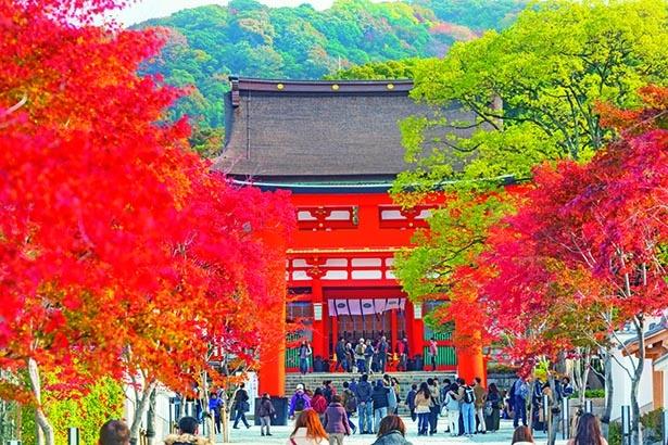 堂々たる楼門と鳥居が紅葉と共演