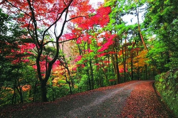森林浴やバードウォッチングを楽しめる遊歩道があり、秋には色鮮やかに木々が紅葉する