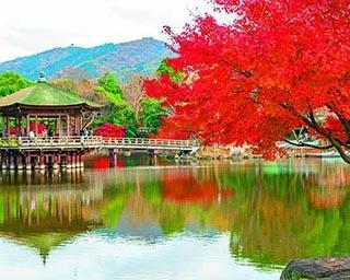 奈良公園の絶景紅葉スポット!シカが戯れる真紅の公園を満喫しよう