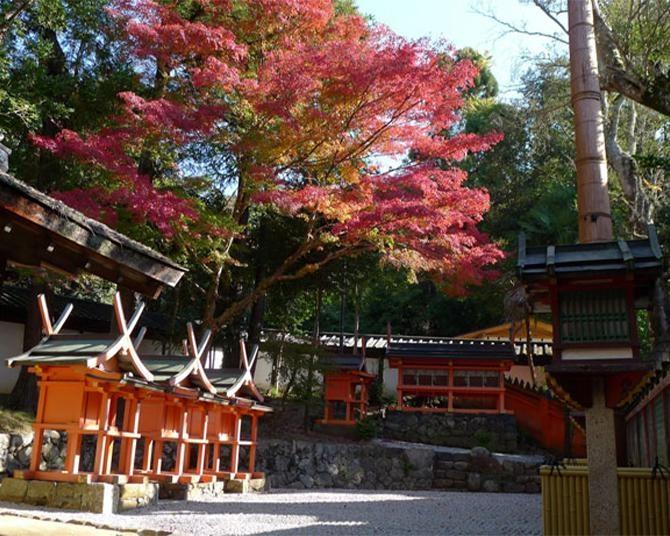 奈良・春日大社の絶景紅葉スポット!朱塗りにイチョウの黄色が映える