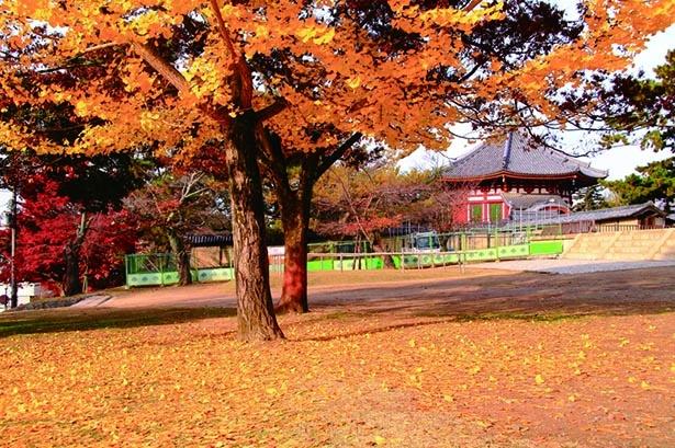 【画像】背後に南円堂を望む、絵画のように美しい紅葉の景色