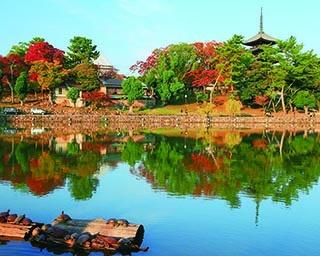 奈良・興福寺の絶景紅葉スポット!国宝建築物が紅葉で華やかな姿に