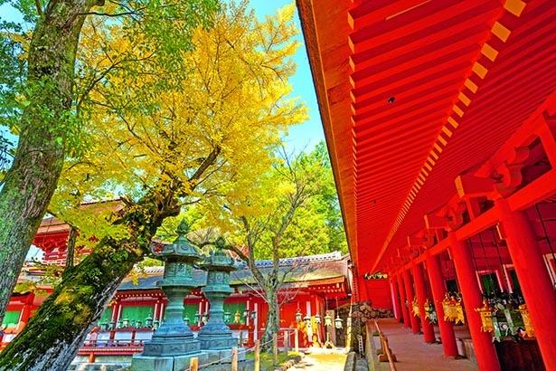 朱塗りの御廊に紅葉が映える創建1250年を迎えた古社
