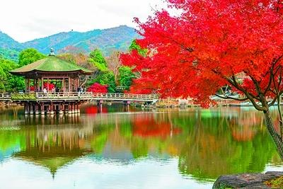 シカが戯れる真紅の公園には紅葉の名所がたくさん