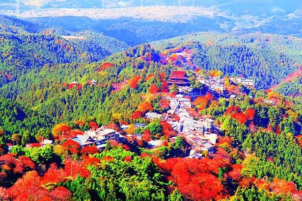 世界遺産の山を彩る神秘的な紅葉