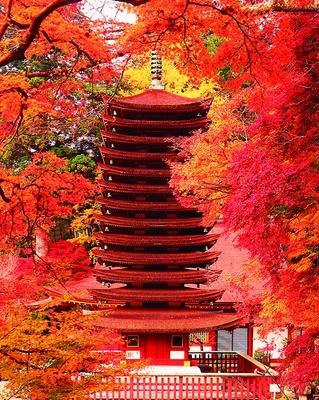 「関西の日光」と称される神社