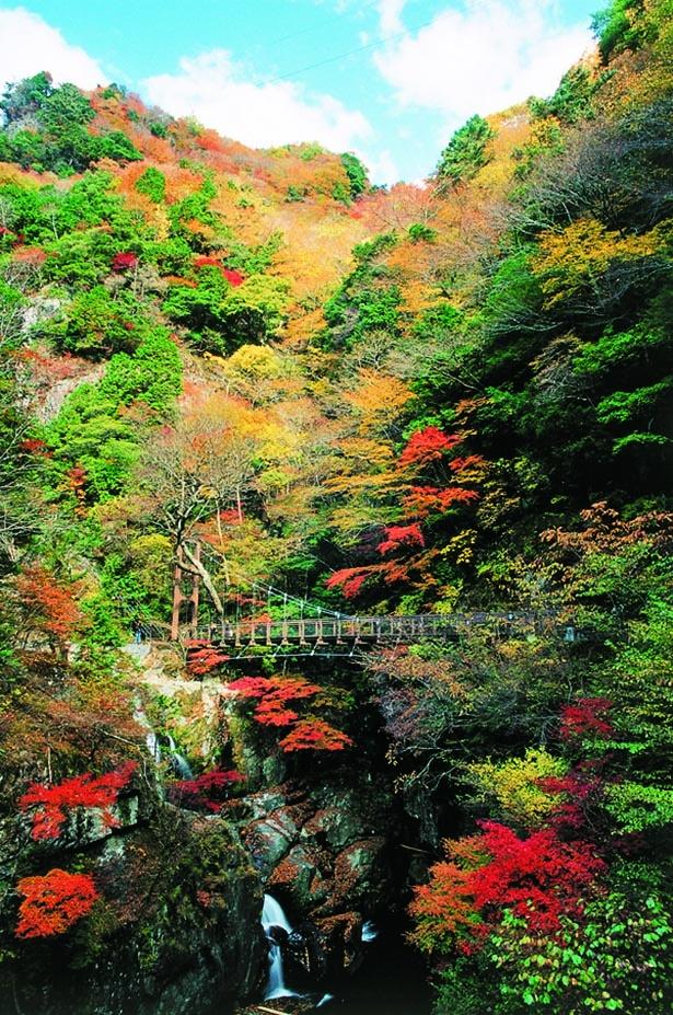 つり橋からダイナミックな渓谷美を