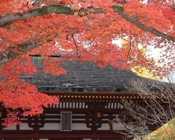 奈良県のおすすめ紅葉スポット9選!紅葉が彩る歴史ある寺社を鑑賞しよう