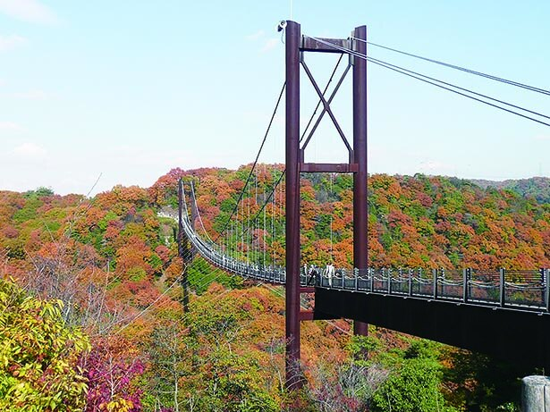 【写真】つり橋から360度広がる紅葉「大阪府民の森ほしだ園地」
