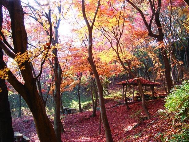 秋色の芥川沿いを渓谷ハイキング