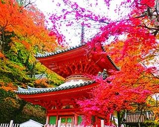 大阪府のおすすめ紅葉スポット7選!お祭りやハイキングも一緒に楽しもう