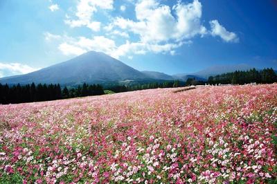 【写真を見る】2019 生駒高原コスモスまつり / 約100万本のコスモスが咲き誇る風景は圧巻!