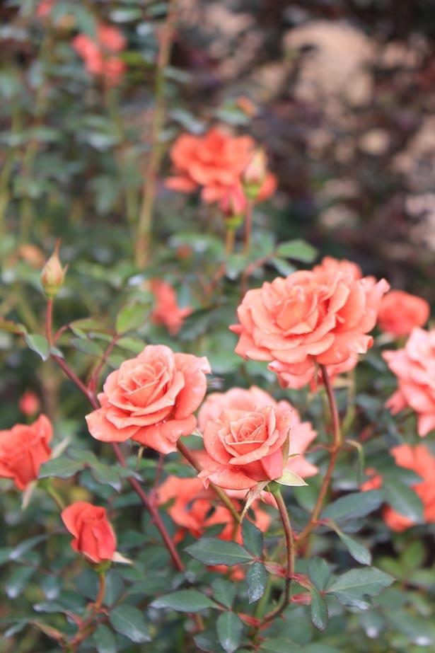 【写真を見る】可憐な花々が園内を彩る