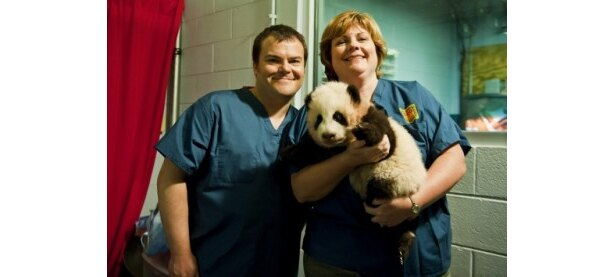【写真】緊張しながら赤ちゃんパンダの頭をなでたというジャック・ブラック