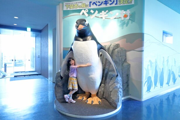 下関市の市鳥はなんとペンギン!