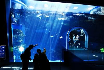 最大水深6m、水量約700トンを誇る世界最大級のペンギンプール。「あんな深いところまで潜れるんだね」