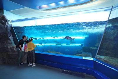「関門海峡水槽」は、実際の海の中をのぞいているような感覚になれる。関門海峡の潮流を再現している