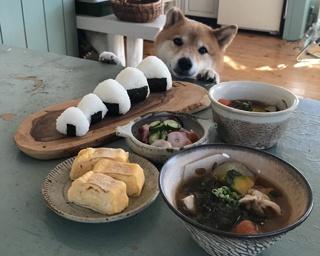《画像多数》柴犬×朝ごはんに癒される人続出!!食いしん坊犬ゆずちゃんとのおいしい暮らし
