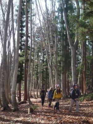 豊かな森が山ガールを包み込む