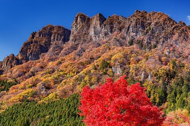 ダイナミックな山容を彩る、真っ赤なモミジの紅葉
