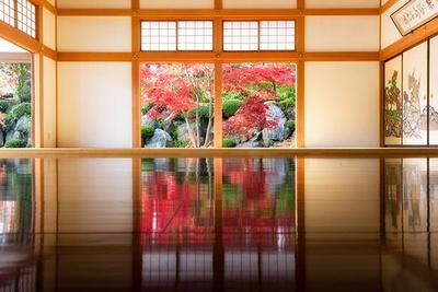 圧巻の美しさに息をのむ、関東では貴重な「床もみじ」