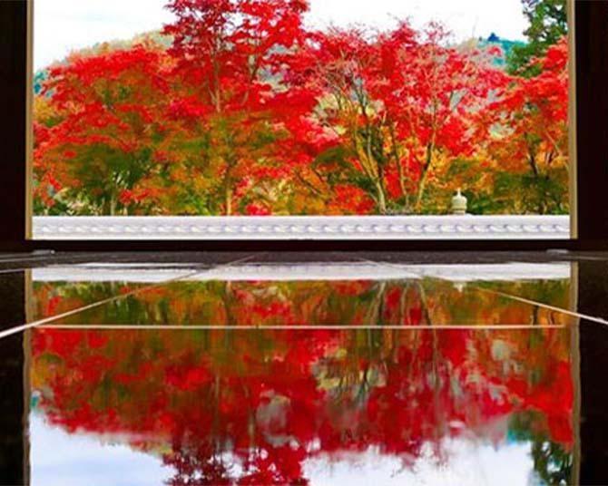 """東京近郊で出会える奇跡の絶景紅葉!「宝徳寺」の""""床もみじ""""で自然と境内のコラボを満喫"""