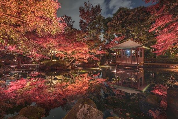 都会の風雅を演出する幻想的な秋の水