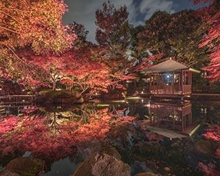東京近郊で出会える奇跡の絶景紅葉! 都会の穴場「大田黒公園」で和の趣を感じよう