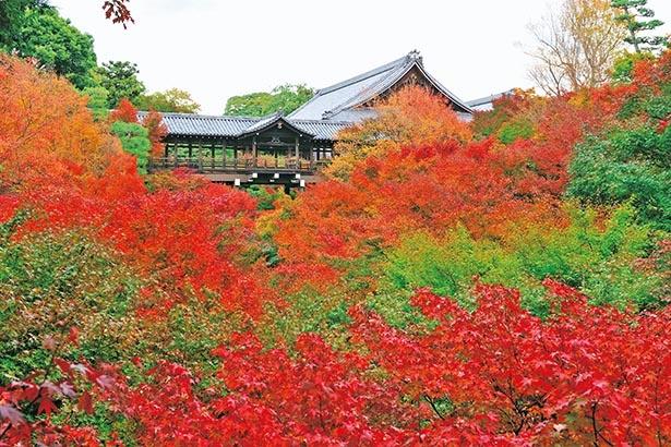 東福寺(京都市東山区)