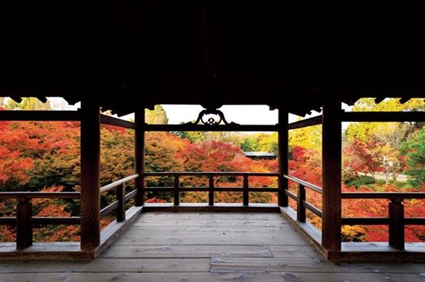 通天橋から見渡す数百本のモミジは東福寺随一の美しさ