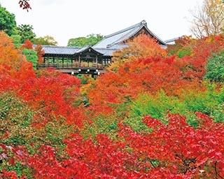 京都・東福寺の絶景紅葉スポット!日本屈指の渓谷美を堪能しよう
